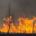 Traveling to Greece this Summer? Travel Insurance Amidst Deadly Wildfires Explained